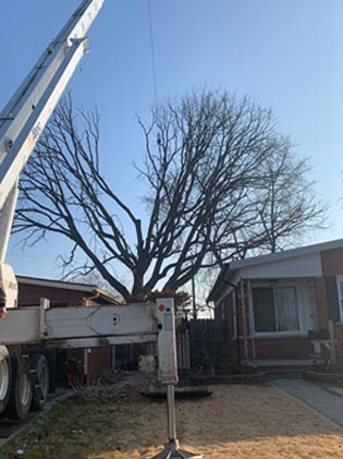 Treemendous Tree Care LLC