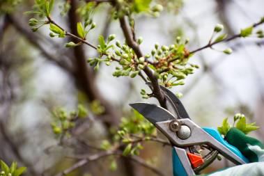 Treemendous Tree Care LLC